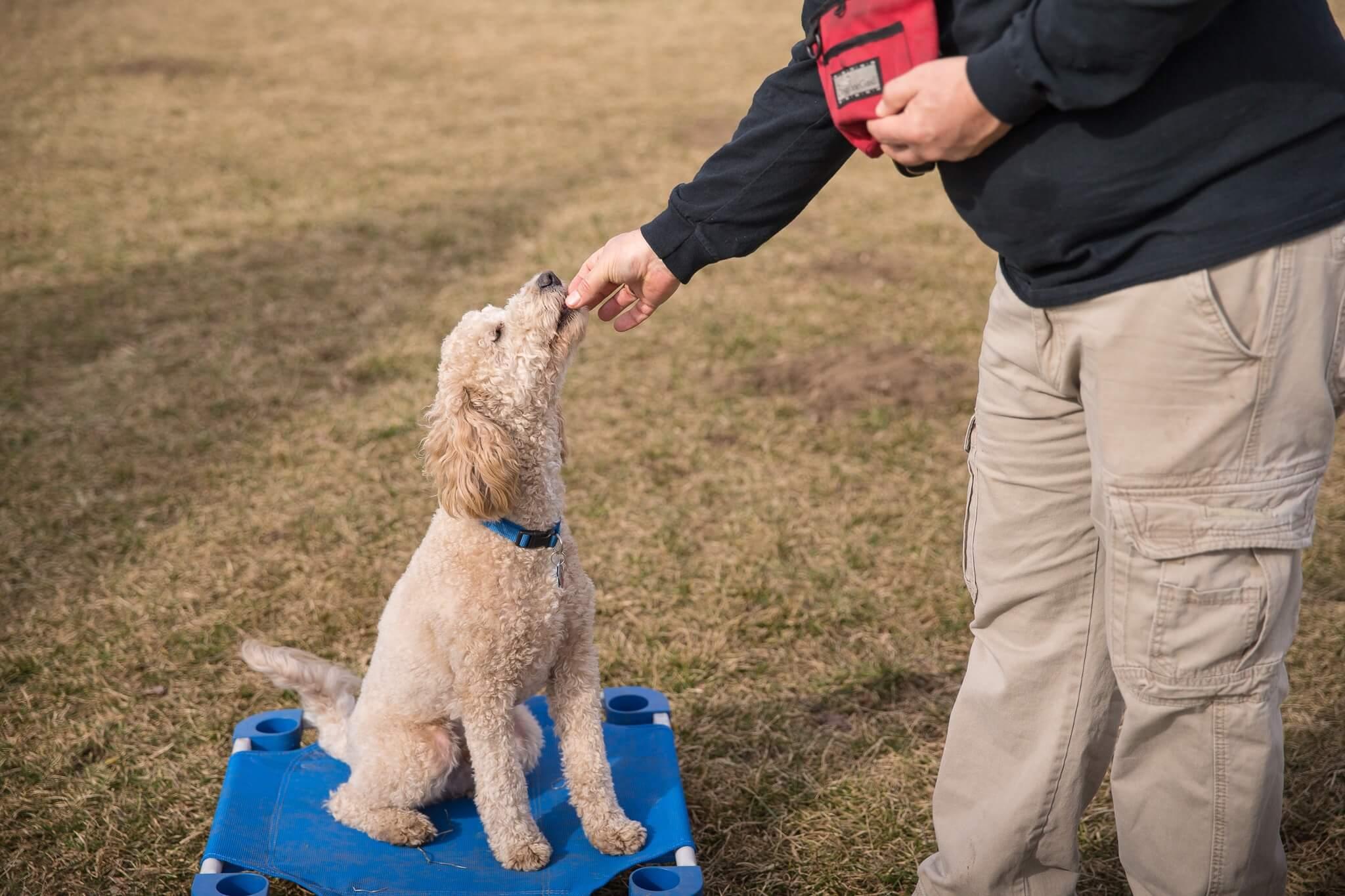 Balanced Dog Training | Adams K-9 Training & Kennel