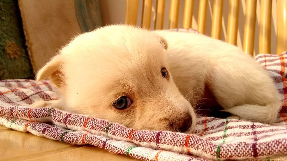 Housebreaking Guidelines | Adams K9 Dog Training & Kennel