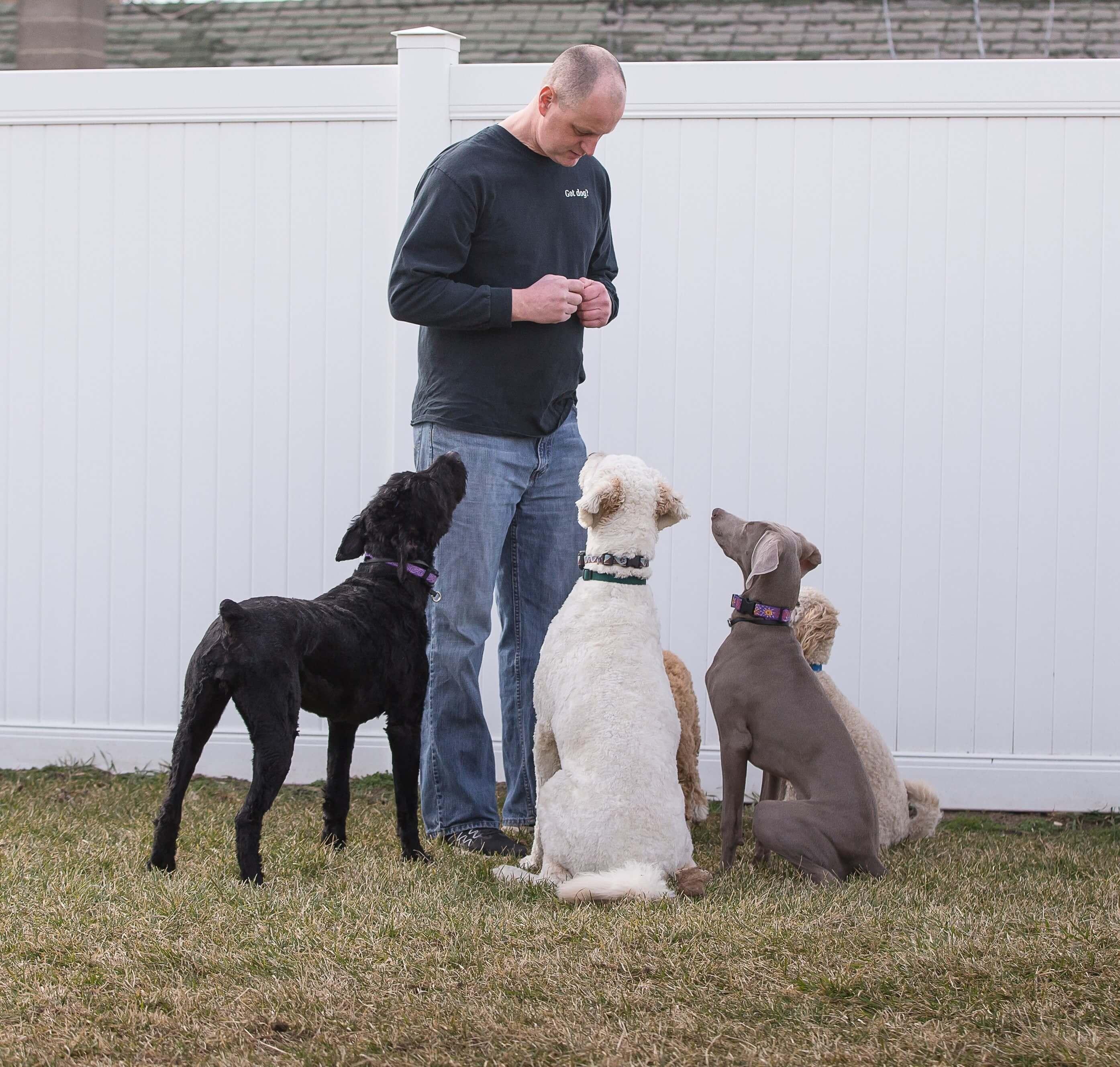 Programs – Adams K-9 Dog Training & Kennel